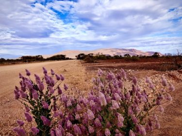 2020年8月 Day4 西オーストラリア 北部ロードトリップ  Mt.Augustus→Karijini