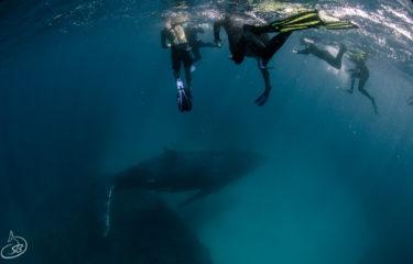 2020年8月 Day14 西オーストラリア 北部ロードトリップ 念願のクジラスイム ツアー